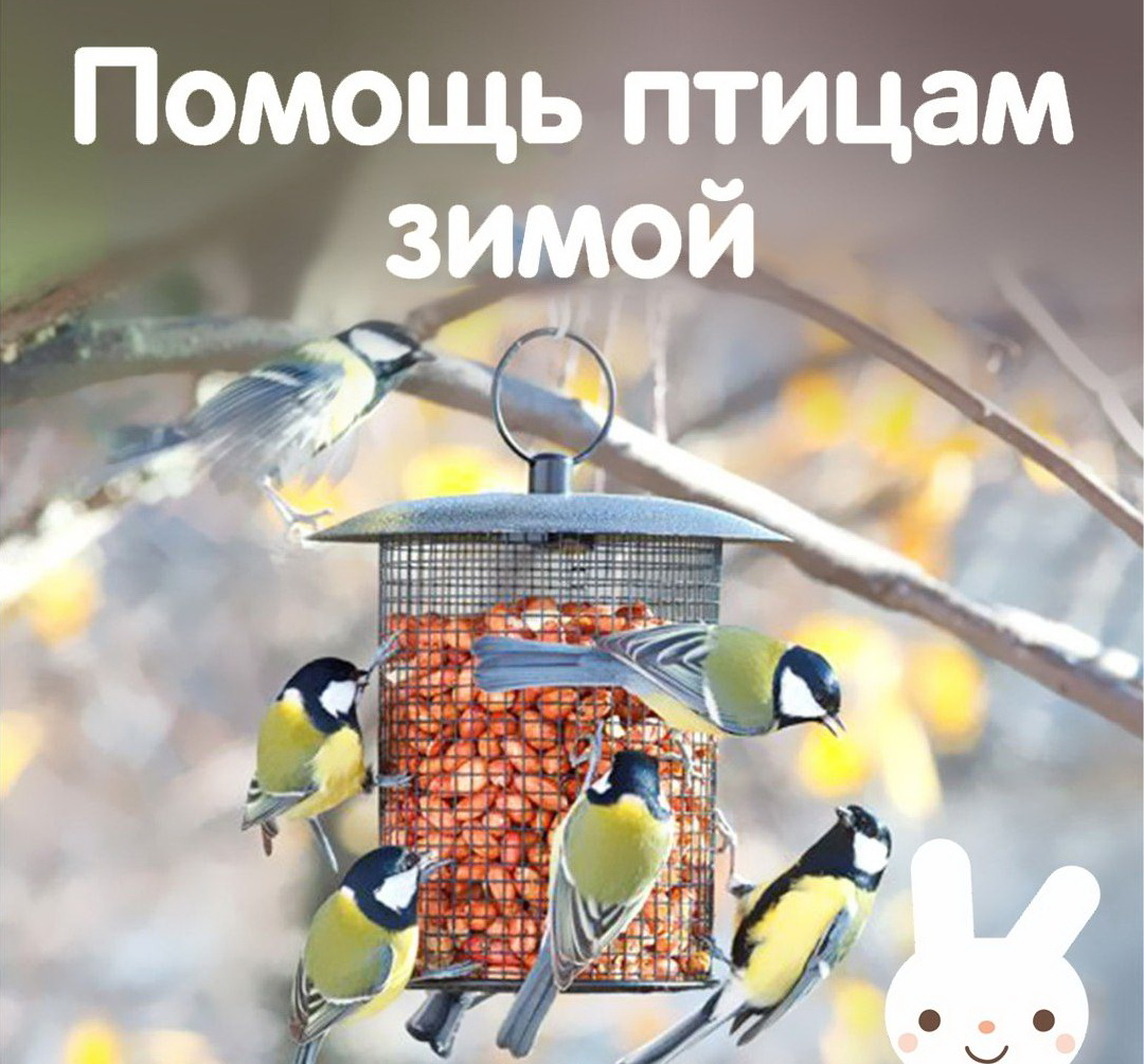картинки поможем зимующим птицам