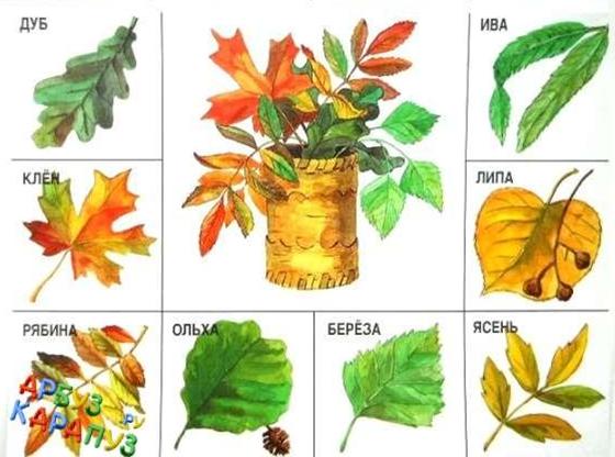 серебра зависит деревья и их листья картинки и названия дидактических высушить