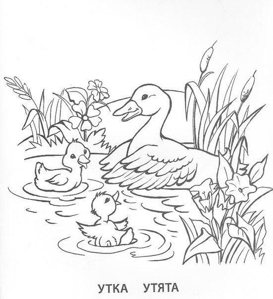 раскраски животные птицы и их детеныши всем учителям