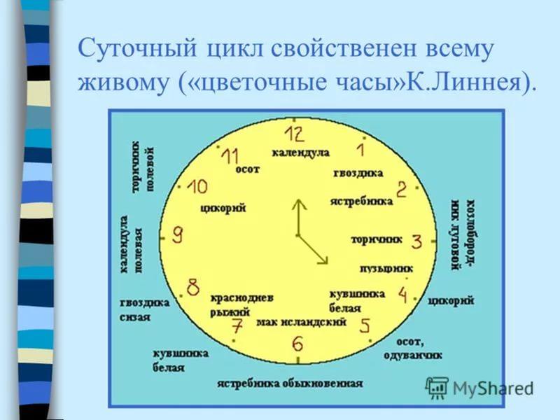 Двенадцать зодиакальных животных тюркского цикла.