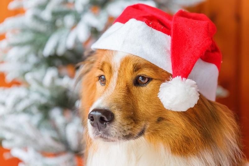 Мальчику года, новогодние картинки с собаками