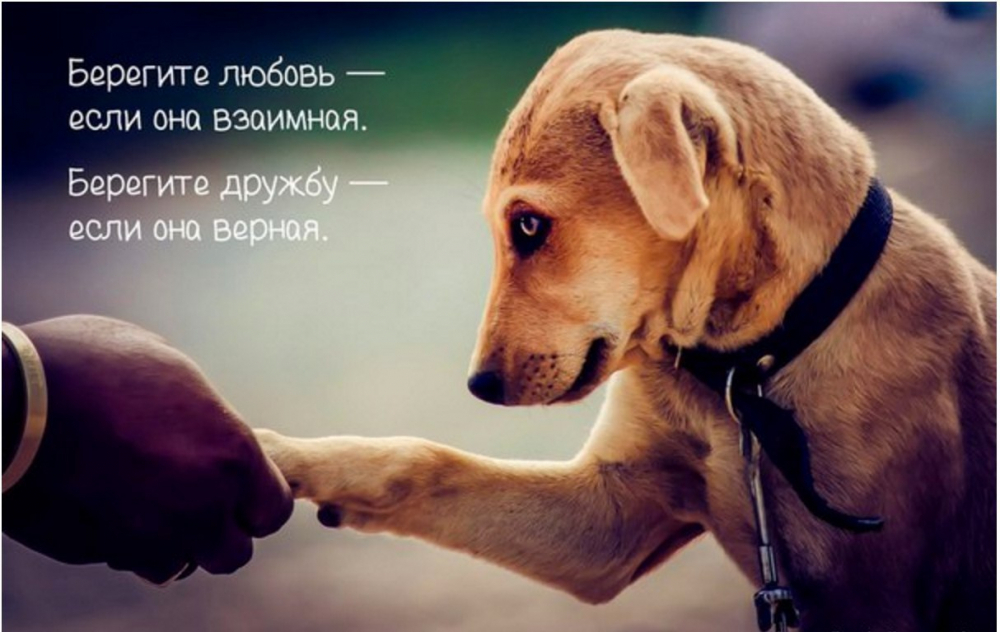 Статусы и картинки про собак