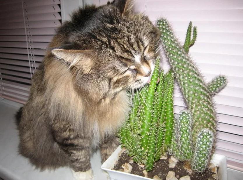 Картинки кот с кактусом