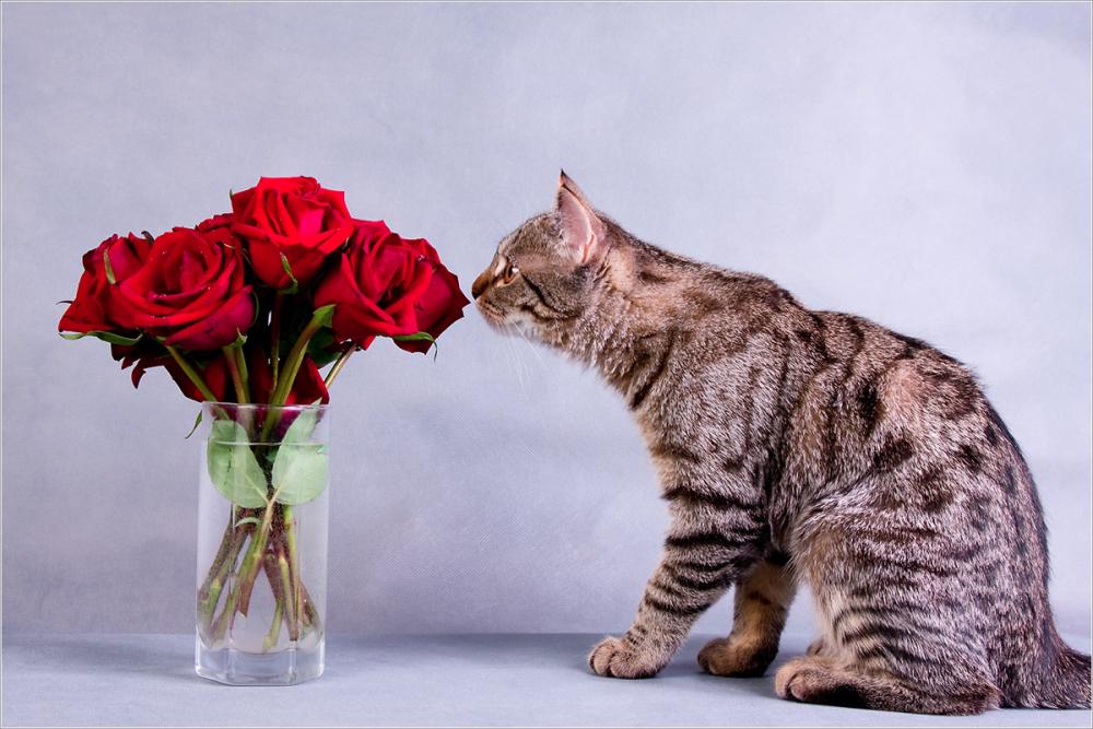 дочку спать, кошка с цветами поздравления фото же