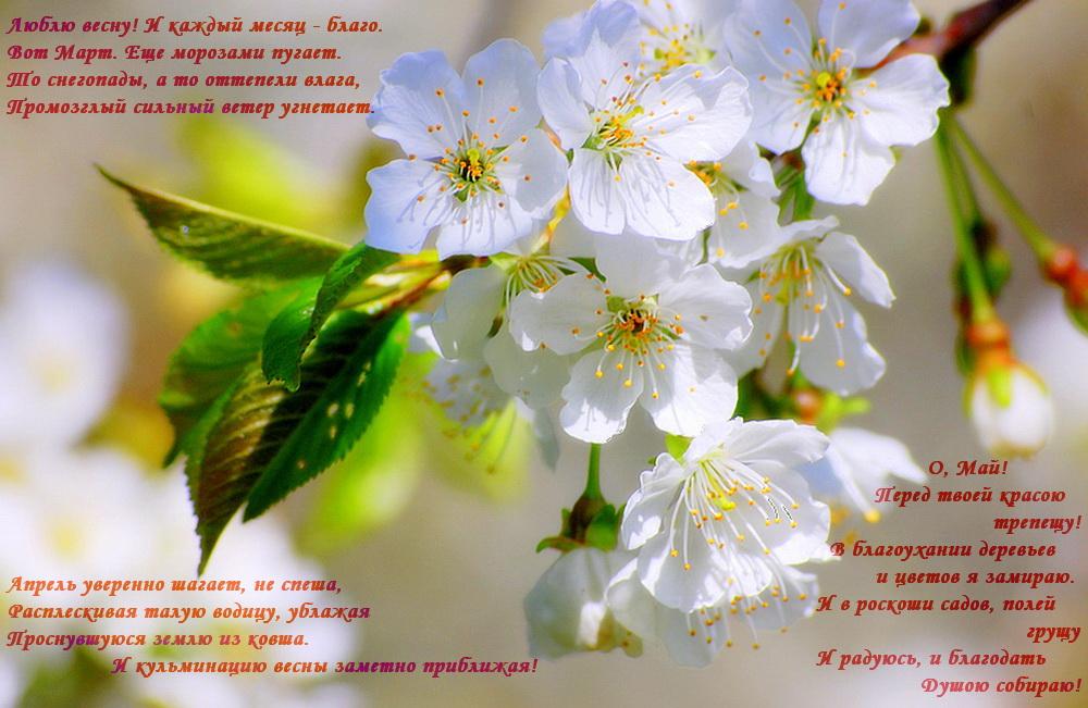 Картинка со стихами весны тебе красивой