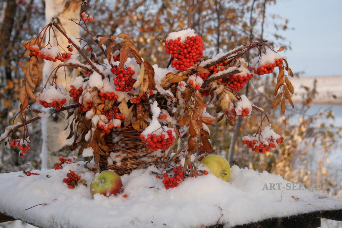 своих картинки с рябиной вот и зима чеченок назовём амина