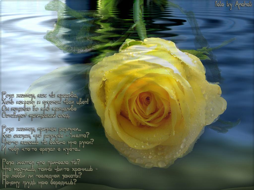 картинки розы с красивыми стихами газета опубликовала