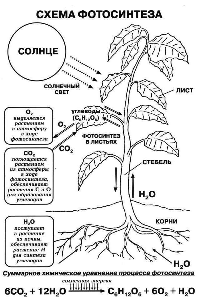 курсы блогингу процесс фотосинтеза у растений удобное время перезвоним