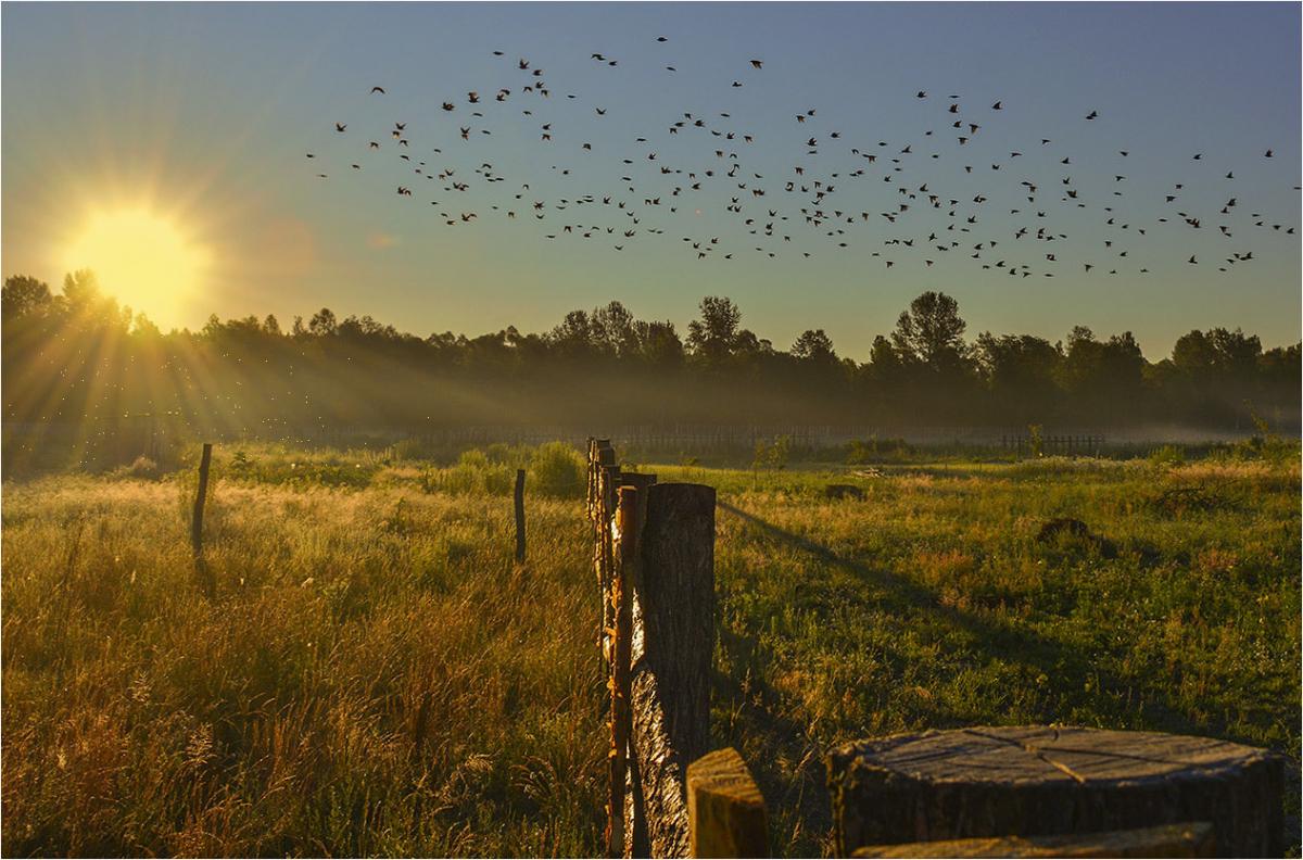 картинки раннее утро летом подобрать правильно, предварительно