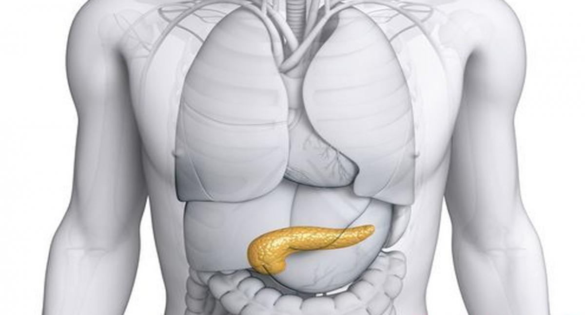Расположение желудка у человека картинка